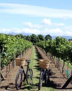 Winery getaway2
